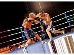 Боксеры широкоформатные фото