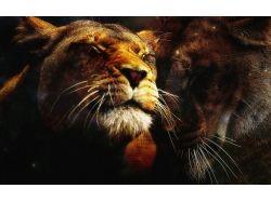 Львы любовь картинки