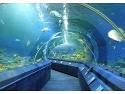 Анимация аквариум или подводный мир