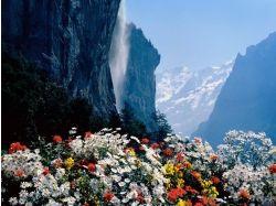Фото цветы в горах азербайджана