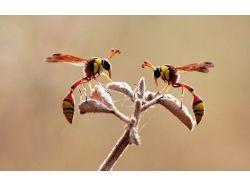 Любовь  и природа картинки