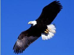 Картинки животные орел