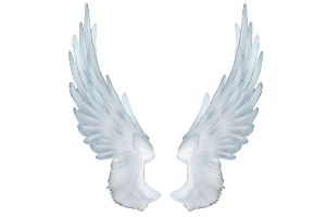 Крылья фото