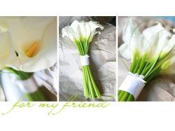 Фото цветы каалы