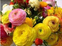 Уход фото цветы
