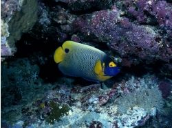 Обои для рабочего стола подводный мир рыбы