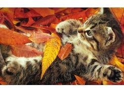 Кошки  и осень картинки
