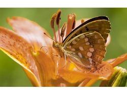 Картинки цветы природа животные ромашки
