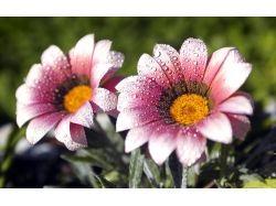 Картинки цветы бесплатные