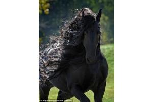 Картинки кони
