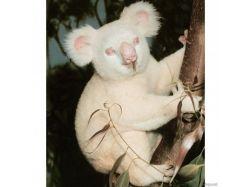 Картинки животные альбиносы