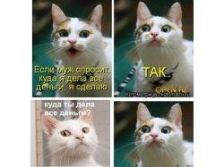Прикольные картинки  с кошками скачать