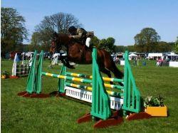 Лошади конный спорт картинки