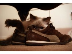 Коты и кошки любовь картинки