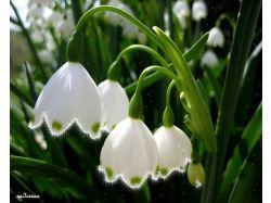 Картинки цветы в снегу анимашки