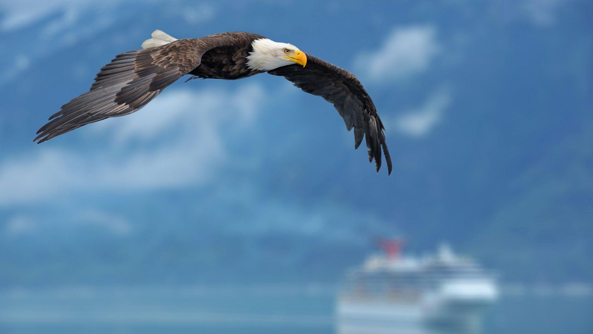 pin 1440x900 american eagle - photo #2