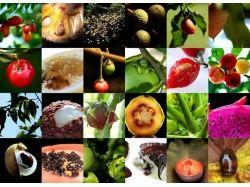 Экзотические, фрукты фото