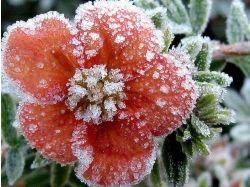 Квадратные картинки цветы в снегу