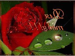 Картинки цветы для тебя