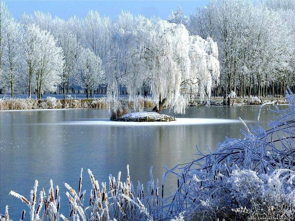 красивая живая картинка зимнего утра уютные апартаменты
