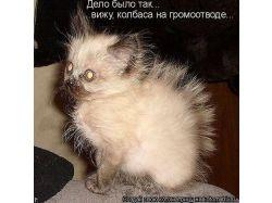 Www прикольные картинки про кошек