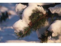 Картинки зима 240 320
