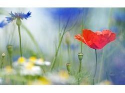 Скачать бесплатные картинки цветы ромашки