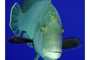 Картинка рыба