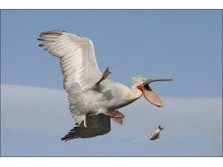 Смешные картинки животные с крыльями