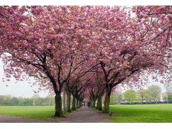 Весна природа картинки
