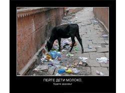 Демотиваторы  про животных смешные