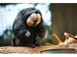 Картинки животные в южной америке