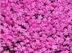 Скачать картинки цветы розы в разрешение1600х1200