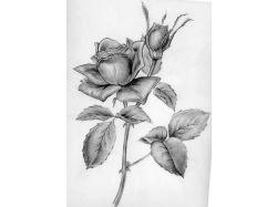 Рисунки карандашом любовь картинки