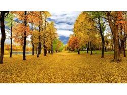 Золотая осень фото яндекс