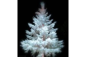 Новогодние елки фотографии