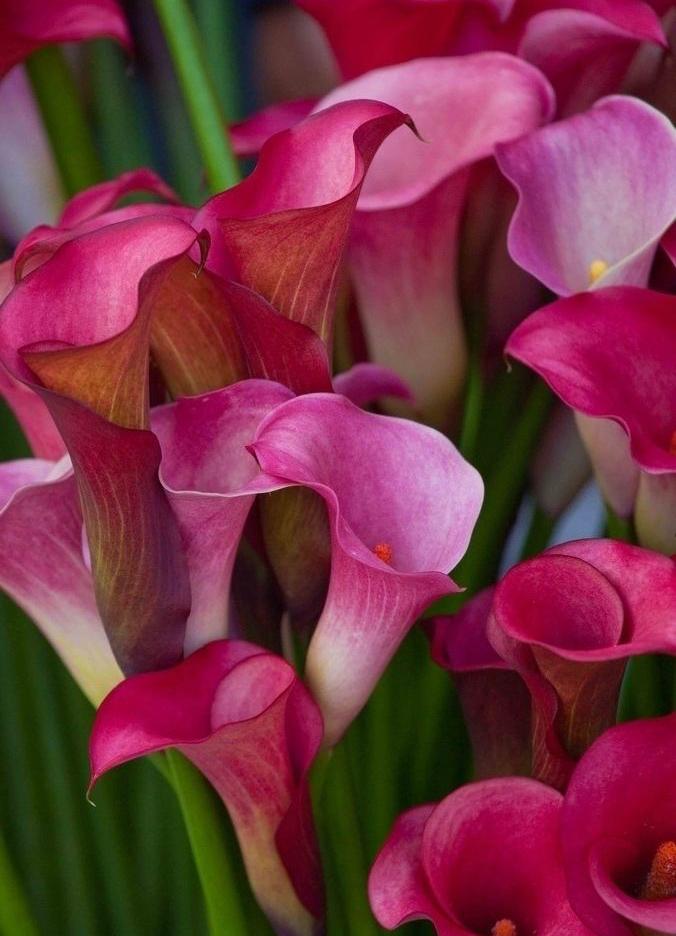 Картинки фото цветов