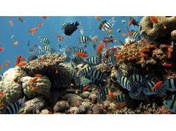 Взлом приложений вконтакте подводный мир