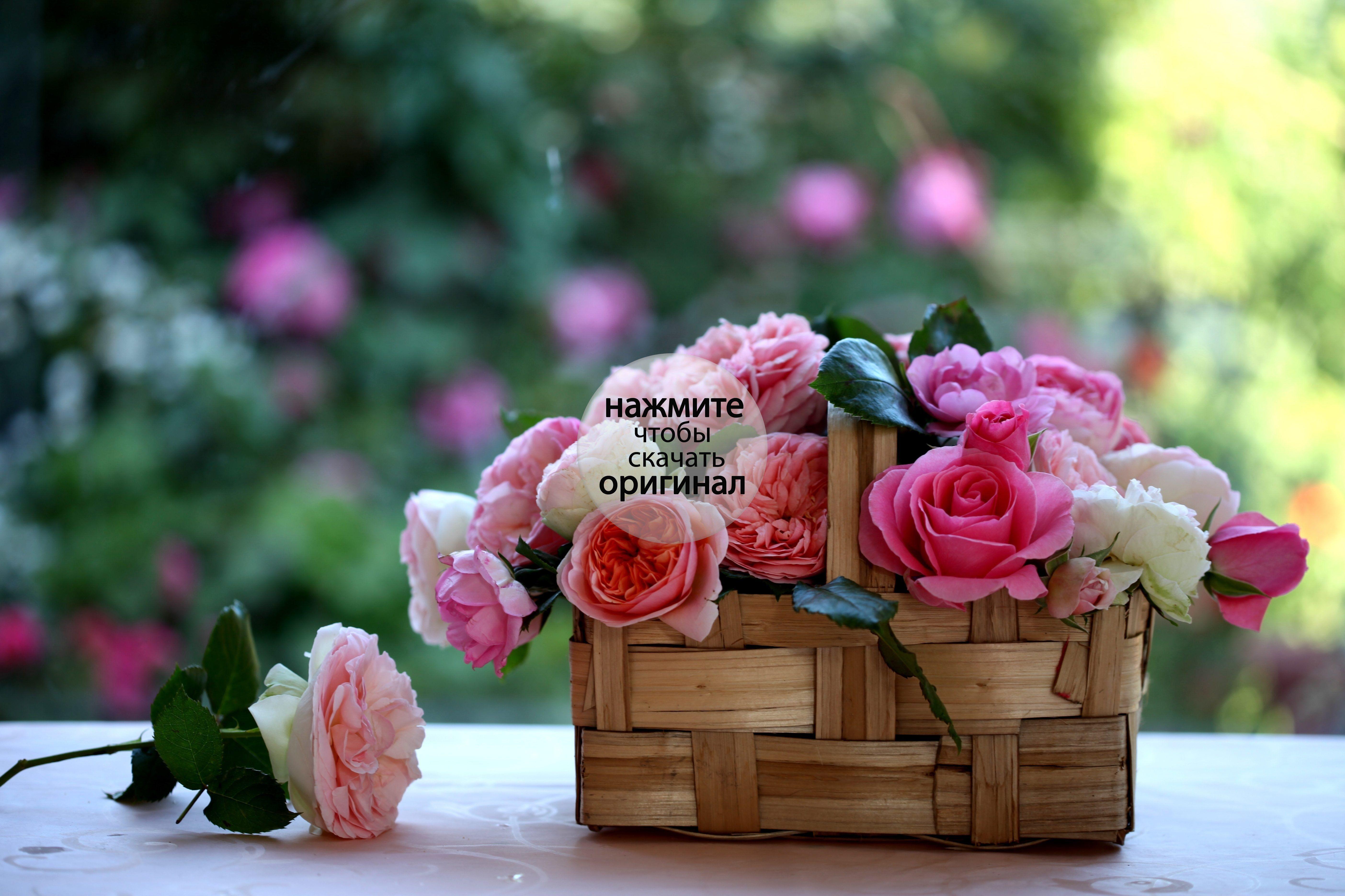 Download higher mark rosas