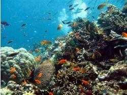 Баги в подводный мир