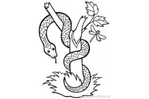 Змея картинка для детей раскраска