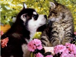 Собаки и кошки романтика картинки