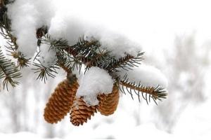 Зима картинки снег