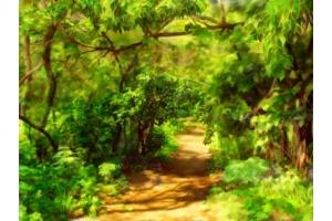 Сказочный лес картинки для детей