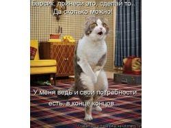 H прикольные картинки про собак