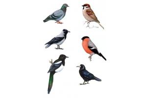 Картинки для детей ворона