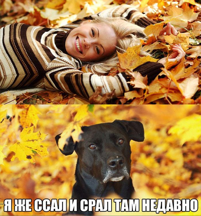смешные фото осень пришла наносят
