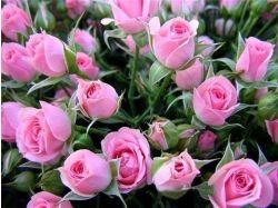 Скачать картинки розы бесплатно