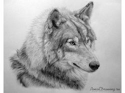 Рисунок природа карандашом