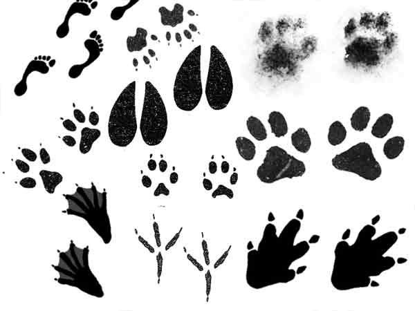 следы рисунки животных постарался показать жителям